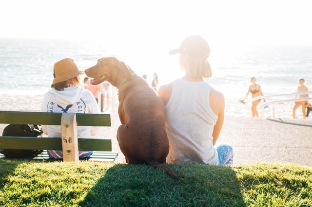 image of woman and dog sitting at the beach
